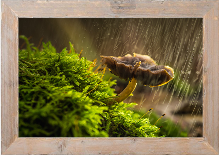Paddenstoel in regen